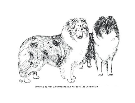 Sheltie Outline Front Wiring Diagrams